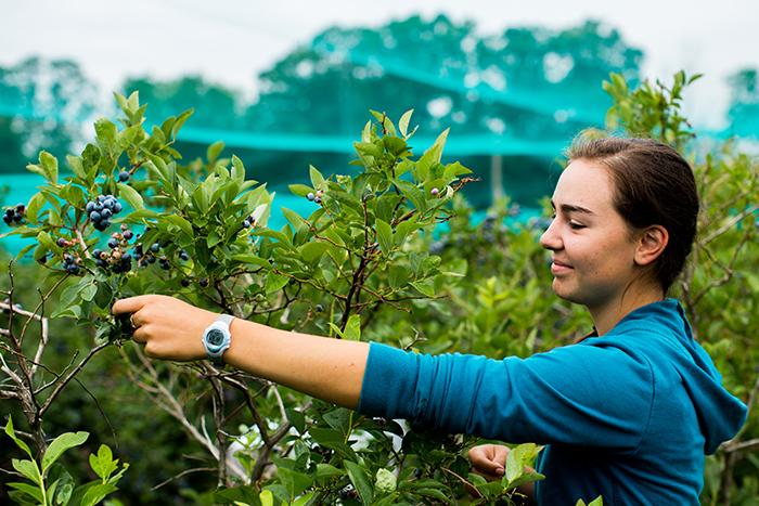 Woman watering plants in nursery